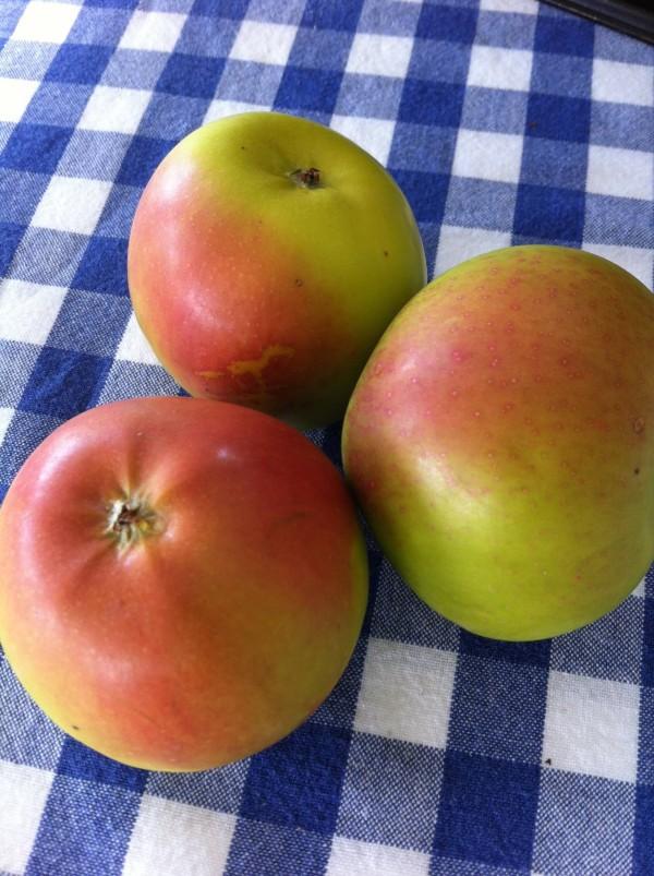 Ballarat apples
