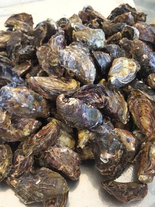 Te Matuku Bay Oysters