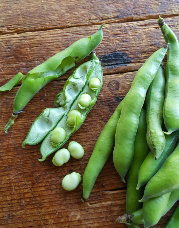 Broad beans 1