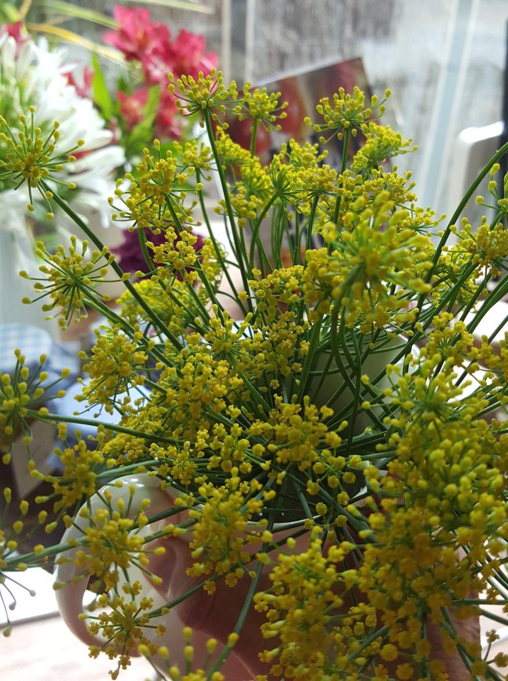 Fennel pollen 1 copy