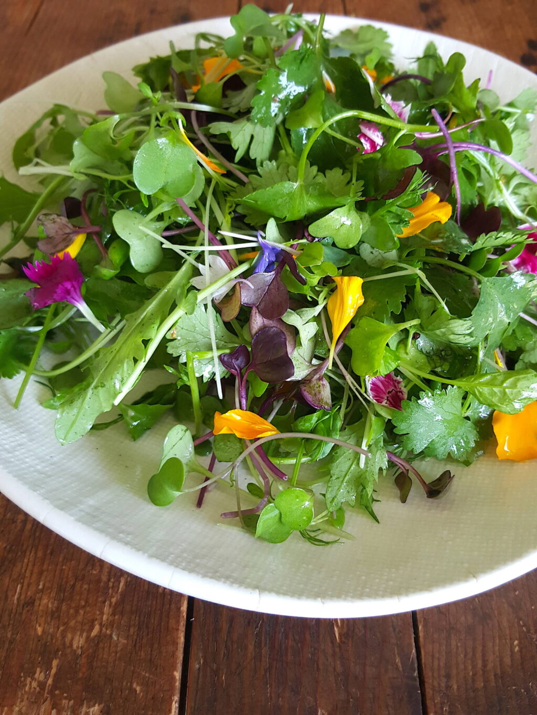 Micogreen Salad with Raspberry Vinegar Dressing